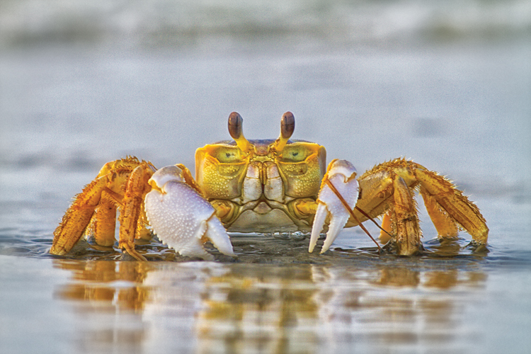 Image result for CRAB DERBY SOUTHPORT, NC IMAGES