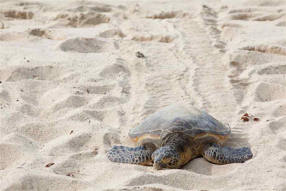 Oak Island Turtle Talks